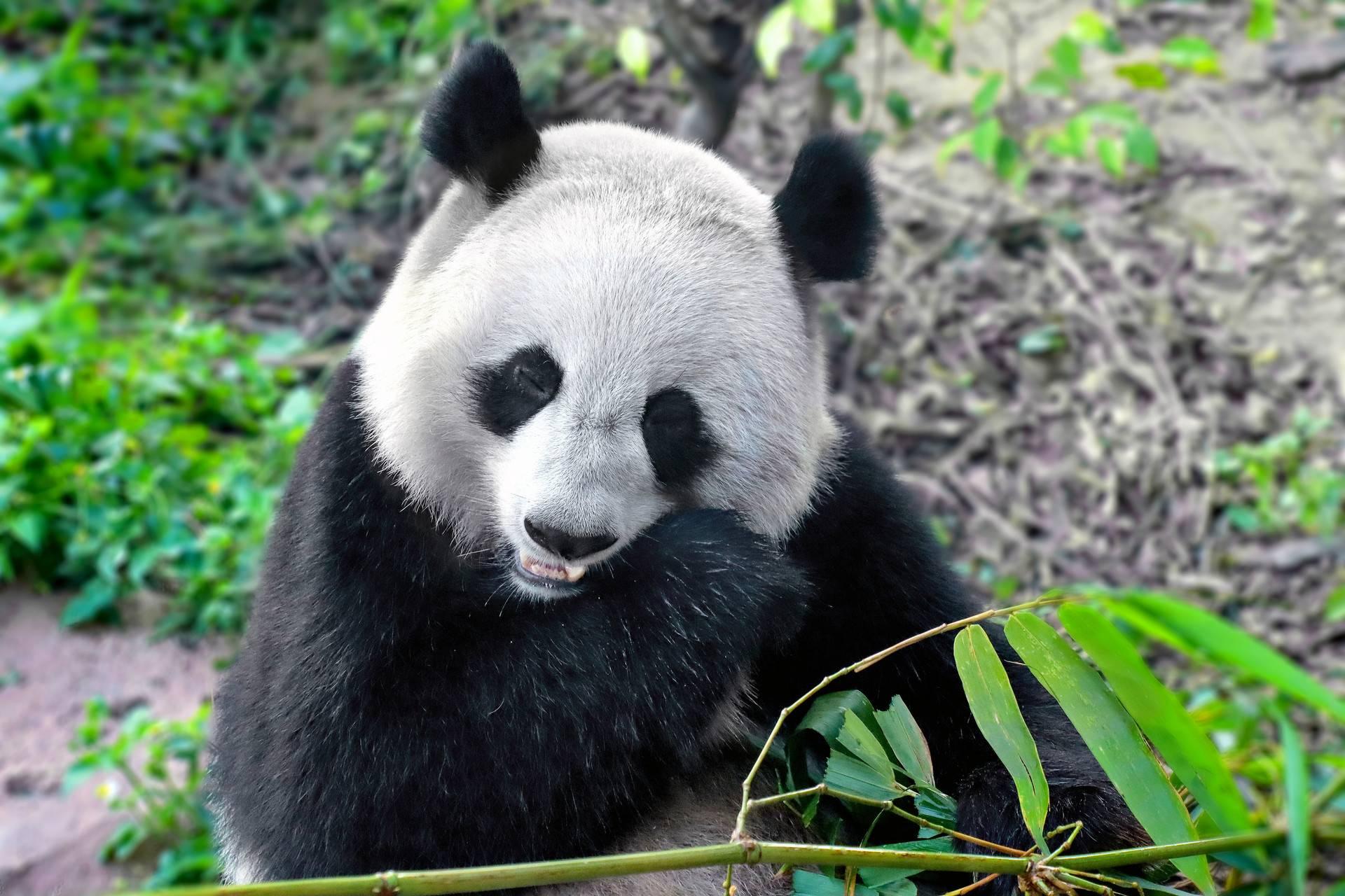 【喜闹天府】四川·成都大庙会+熊猫基地+川菜博物馆+生命奥秘博物馆·双飞5天4晚亲子游