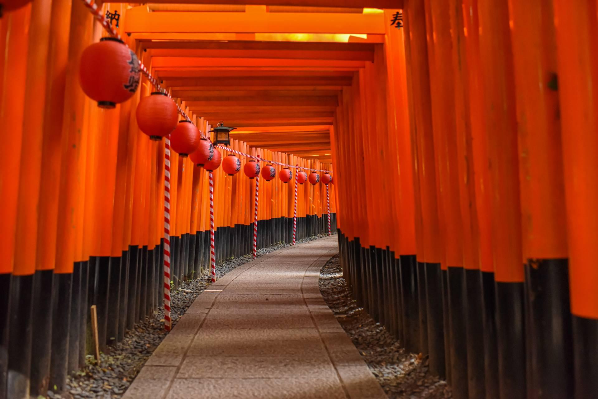 日本京都+奈良经典一天游
